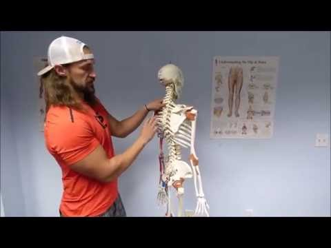 Show Up Fitness:  Skeletal Anatomy For Personal Trainers