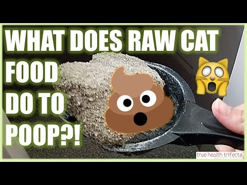 What does the Raw Cat Food Diet do to their POTTY HABITS?! – Cat Lady Fitness