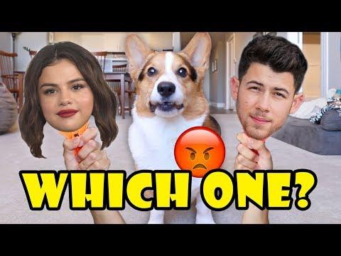 Why Does My CORGI Dislike Selena Gomez & Nick Jonas?    Life After College: Ep. 634