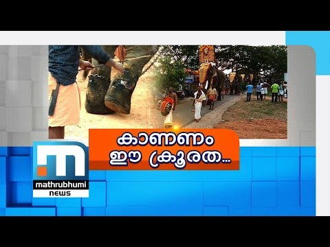 Vets Issue Fitness Certificates To Ill Pachyderms| Mathrubhumi News