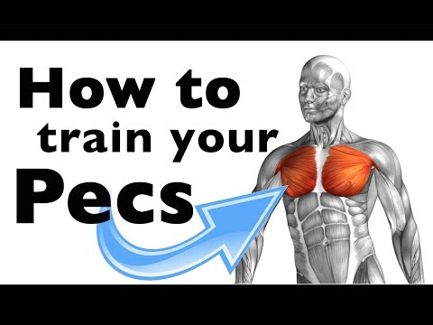 How to: Train your Pectoralis major & minor (+15 gym exercises)