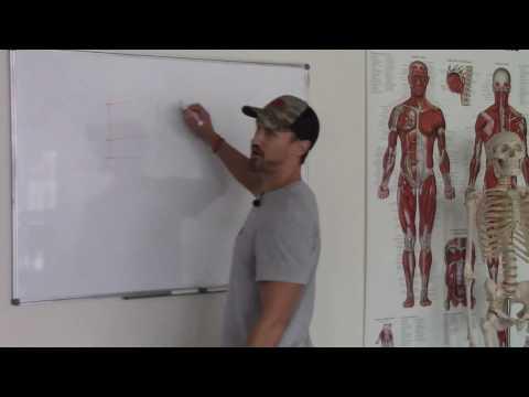 Nutrition 101 | Body Mass Equation Show Up Fitness Online Internship