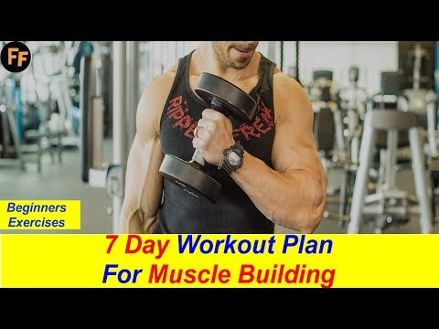 Body Building Workout For Beginners- Day Wise Exercise – Muscle Building Exercises
